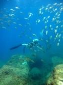 Sorties randonnée subaquatique - Réserve marine de Banyuls -les 27 et 28 juin  2015