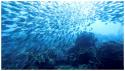Conf CDEBS31 : Pour une gestion durable de la pêche