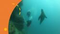 Conf CDEBS31 : Etoiles de Mer en mer de Cortes