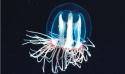 Stage Combio34  : Plancton et laboratoire