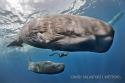 Exposition des lauréats du 40 eme Festival Mondial de L'Image Sous-Marine