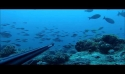 Stage de Pêche sous Marine 4 et 25 juillet 2015